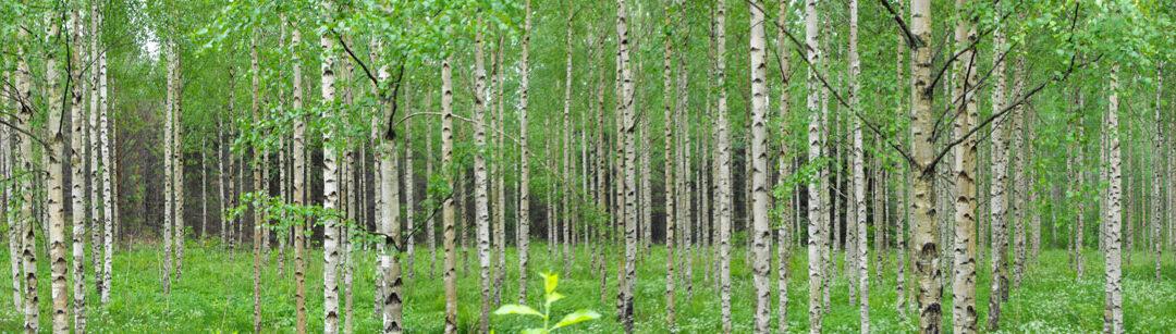 フィンランドからのサステイナブルな木質ソリューション: バイオエコノミーの新たな振興